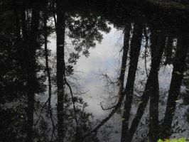reflection in the water. by Trea1969