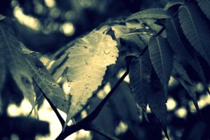 Different Edit of the Leaves by hm923