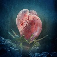 CR - Heart by aequanox