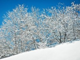 Frosty by cloistering