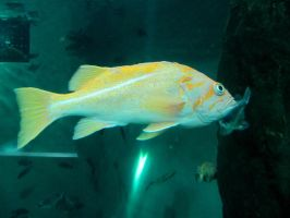 Fish 7 -- Sept 2009 by pricecw-stock