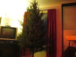 my christmas tree before decorating. by catsvsfox