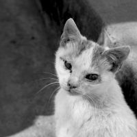 damaged cat by SorinDanut