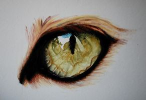 foxeye by parmentides