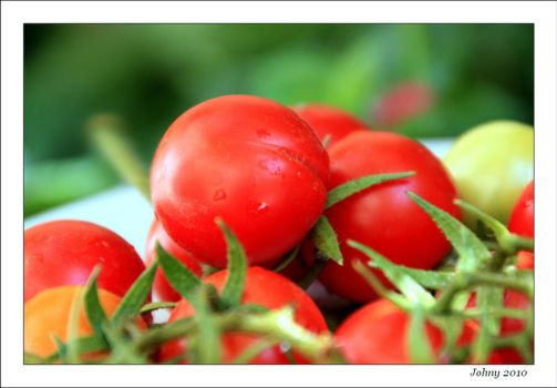 Tomatoes by sounds-and-colors