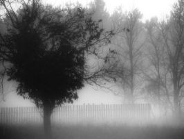 Early Evening Mist by mimulux