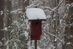 Bird house in the snow by bubblestx