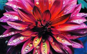 Flower with waterdrops by Maaal-Art