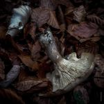 Nature morte by tholang