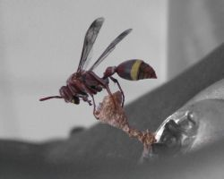 Wasp 3 by Sweetlittlejenny