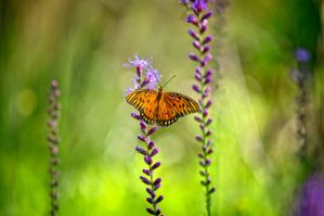 Butterfly by jonbbarry