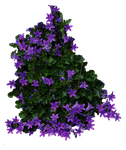 Purple Flowery Bush PNG.. by Alz-Stock-and-Art