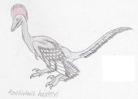 A for Anchiornis by Fingertier