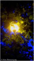 . Light of lamp in trees . by KimikoTakeshita