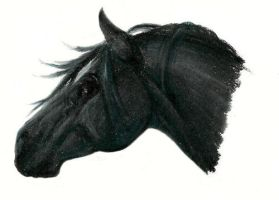 Black horse by vixentheangryfox