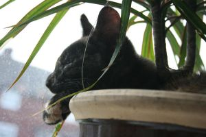 cat in a plant pot IIII by thom-cat