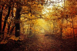 Autumn Walk LIV. by realityDream