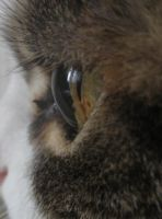 Musa. The cat's eye by DGalious