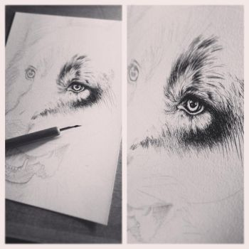 WIP wolf.. by PoisonIky
