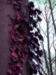.+ Mystic Leaves +. by annaHAC