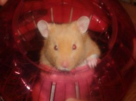 My Hamster Ricky by queeny21143