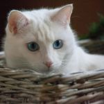 My basket by SarahharaS1
