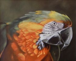 Parrot by georgeayers2000