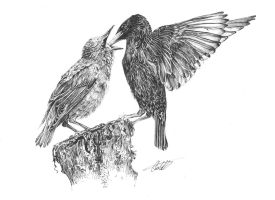 Hungry Starlings by Char10tte
