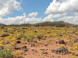 Desert in Bloom by SharPhotography