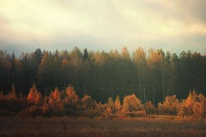 Forest by Ellistrae