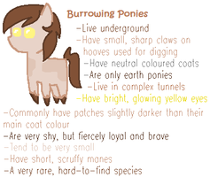 Burrowing pony species by LittleSnowyOwl