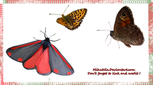 3 HQ butterflies stock by Miha3lla