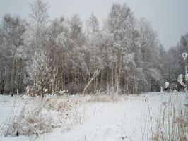 Winter forest 611 by MASYON