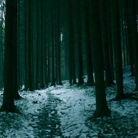 Swiss Forest. by nymphs-and-the-wolf
