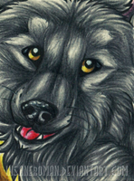 Random Wolf ACEO by InsaneRoman