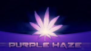 Purple Haze - Wallpaper by Jorge-Carmona