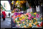 Flower Stall by Megglles