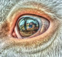 cow eye with reflections by soraxtm