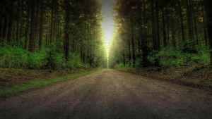 HDR Pine Forest (Dark) by pantsonnos