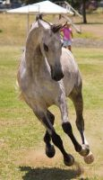 STOCK - TotR Arabians 2013-397 by fillyrox
