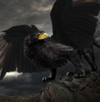 The Black Gryphon by etcKitty2006