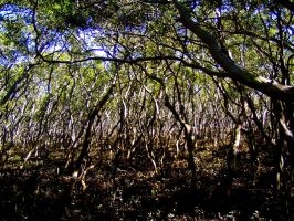 Mangroves by AfroDitee