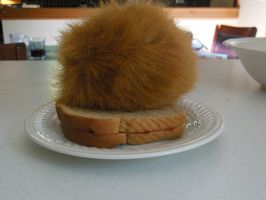 There's a Tribble on my Sandwich.... by vulcangirl14