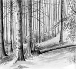 Gray scale forest by LinMac