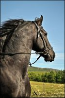 Friesian horse by JMD86