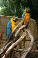 Palm Beach Zoo 7 by mirandaadria-stock