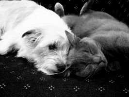 they love each other.. by smileyphotography