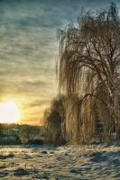Willow Gold by jaelise