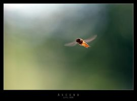 Ascend by Mr808