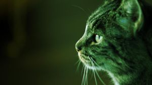 Cat's green profile HD by Khrinx